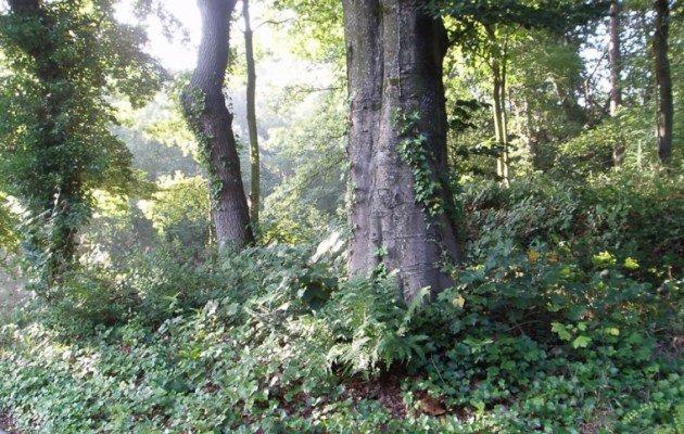 Bomen op de heuvel De Clinge Schapedrift 7-9 Zeegse
