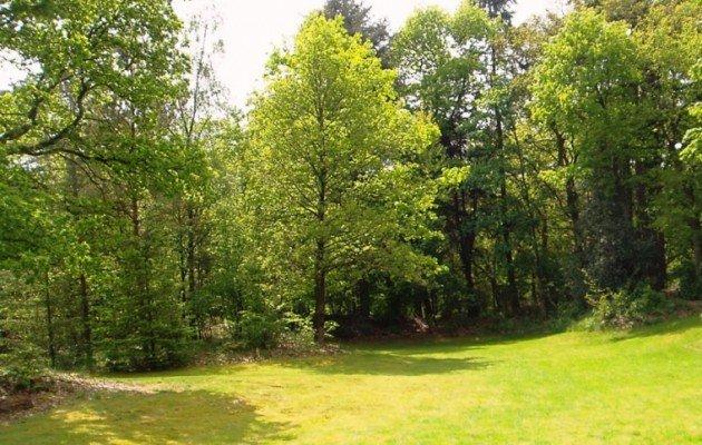 Grasveld en bos De Clinge Schapedrift 7-9 Zeegse