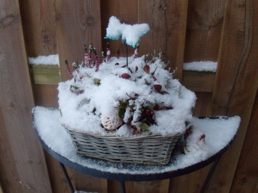 Een Warme Winter : B&b de vlinder hardenberg bedandbreakfast.nl